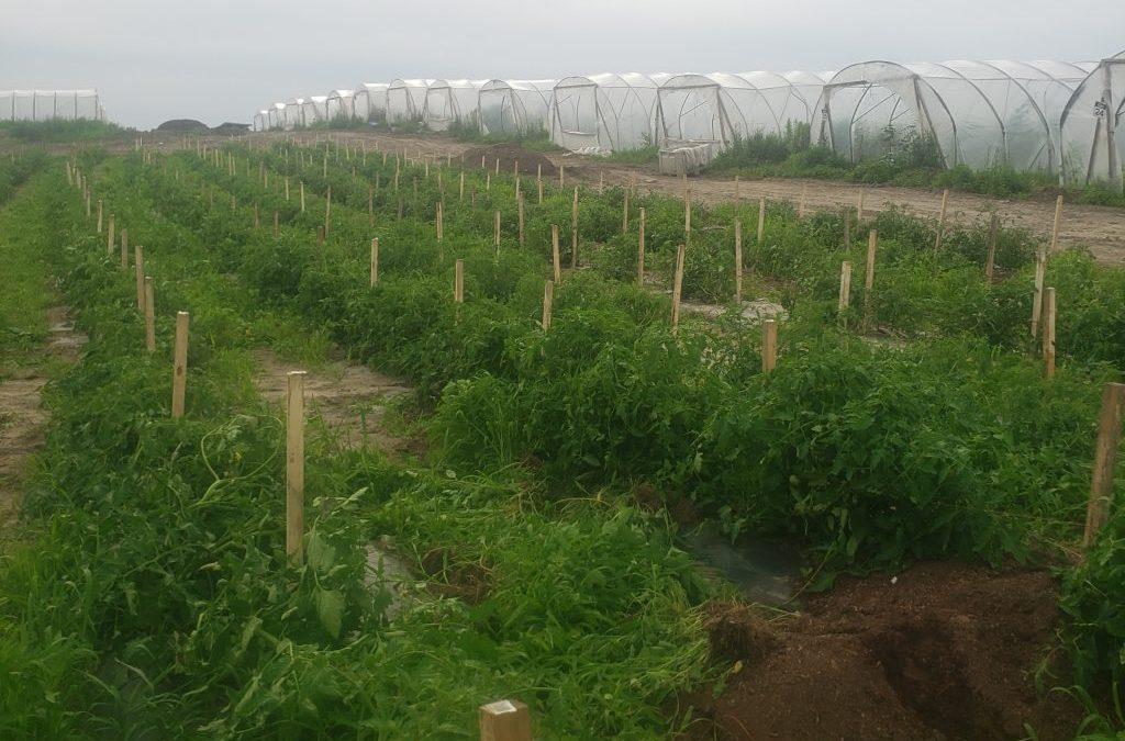 Farm Share Week 8 (July 20-24, 2021)