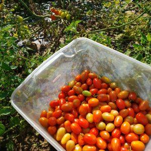 Better Than Candy! Farm Shares Aug 3-7, 2021