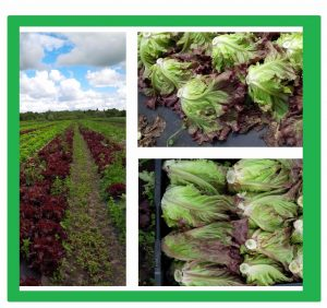 Find out how we grow our delicious organic veggies